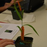 A student examines her growing plant.