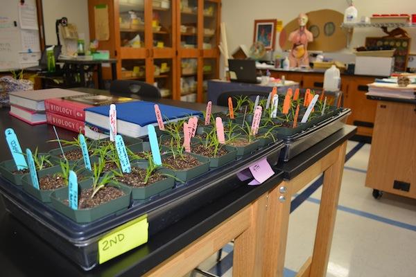 Teachers Mutant Millets